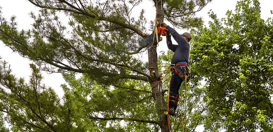 Arboristens kunskap och syfte